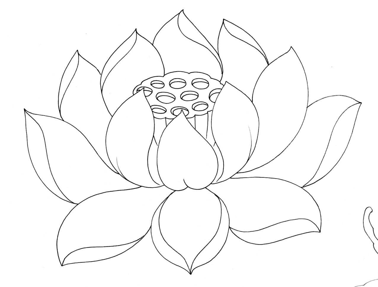 How To Draw A Lotus Blossom
